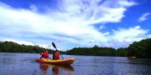 婆罗洲 KELLYBAYS 天堂(红树及东南亚)